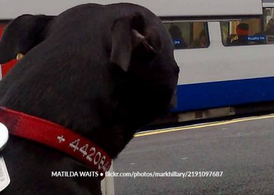 Matilda Waits