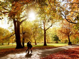 Autumn scenes in Hyde Park, London. Hyde Park is one of the largest parks in central London, England and one of the Royal Parks of London, famous for its Speakers' Corner. © Graeme Robertson / eyevine Contact eyevine for more information about using this image: T: +44 (0) 20 8709 8709 E: info@eyevine.com http:///www.eyevine.com