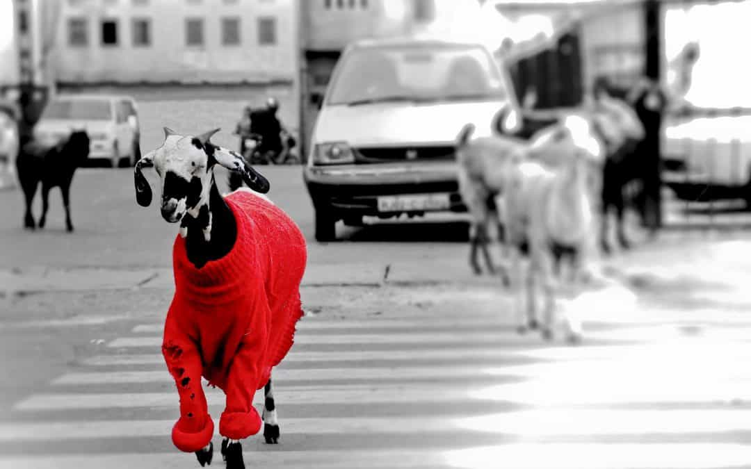 Opening a Bank Account in the United Kingdom