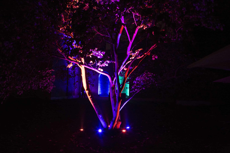 dulwhich-x-mas-trees