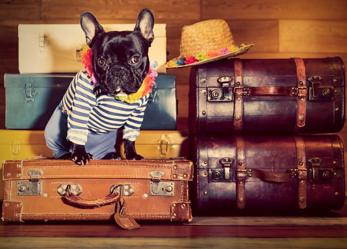 Moving To London: Lifehacks For Pet Owners