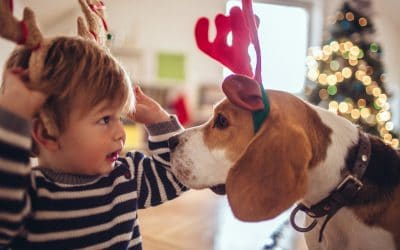 Check How These 8 Adorable Fluffy Friends Embrace The Spirit Of Christmas