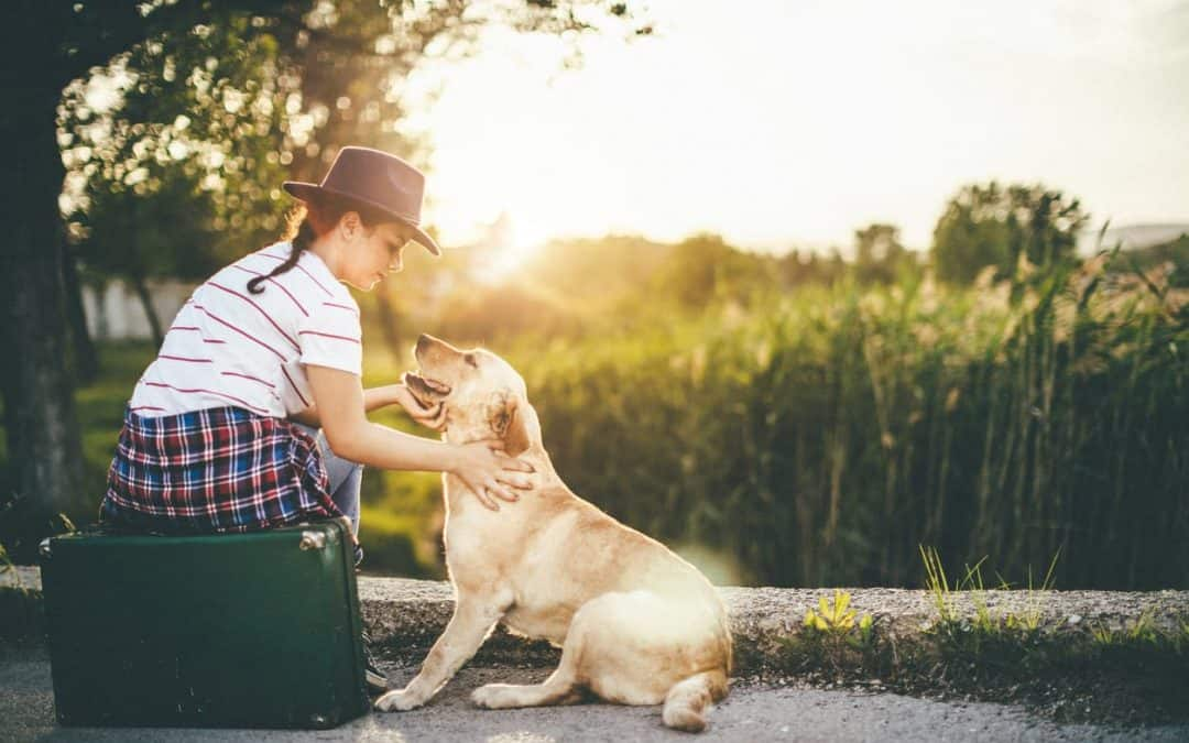 Everything You Need To Know About The Pet Travel Scheme Appliance In The UK
