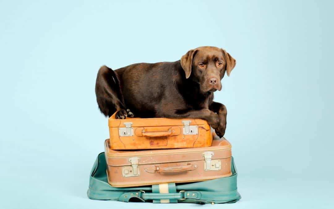 Moving Pets To London And Pet Friendly Rentals In London